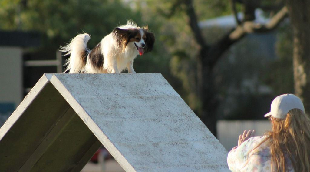 Papillon on top of the scramble - do you know how high it is up here ...